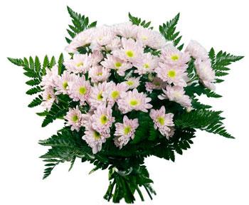 Заказ и доставка цветов по г.новомосковску казань доставка цветов бесплатно